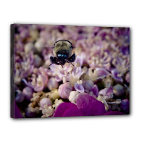 Flying Bumble Bee 12  X 16  Framed Canvas Print by Elanga