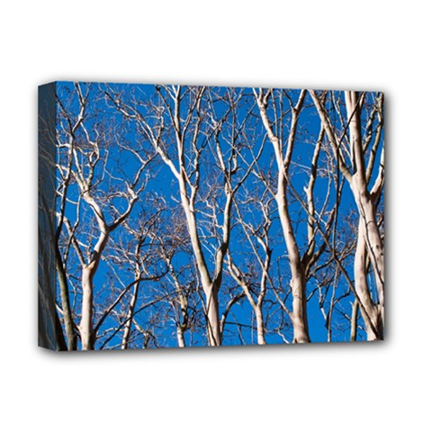 Trees On Blue Sky Deluxe Canvas 16  X 12  (stretched)