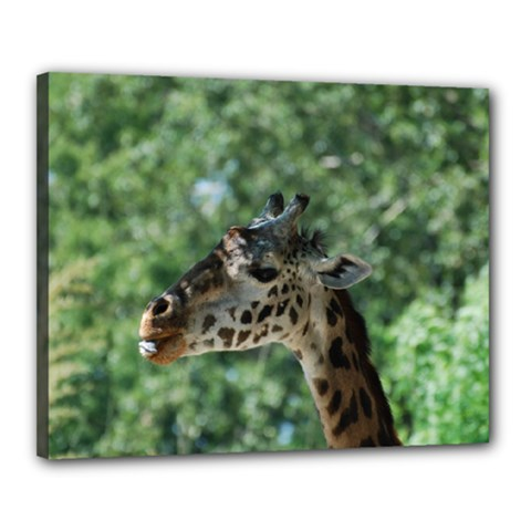 Cute Giraffe Canvas 20  X 16  (framed) by AnimalLover