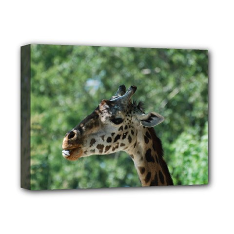 Cute Giraffe Deluxe Canvas 16  X 12  (framed)