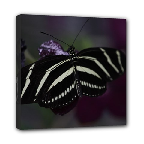 Butterfly 059 001 Mini Canvas 8  X 8  (framed) by pictureperfectphotography