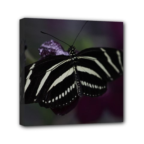 Butterfly 059 001 Mini Canvas 6  X 6  (framed) by pictureperfectphotography