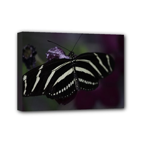 Butterfly 059 001 Mini Canvas 7  X 5  (framed) by pictureperfectphotography