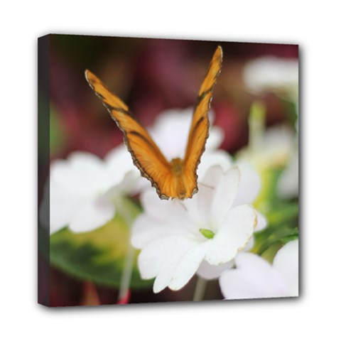 Butterfly 159 Mini Canvas 8  X 8  (framed) by pictureperfectphotography