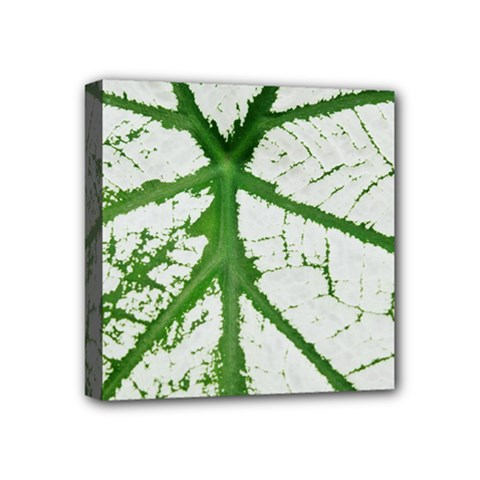 Leaf Patterns Mini Canvas 4  X 4  (framed) by natureinmalaysia
