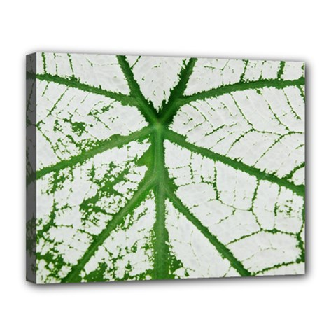 Leaf Patterns Canvas 14  X 11  (framed) by natureinmalaysia