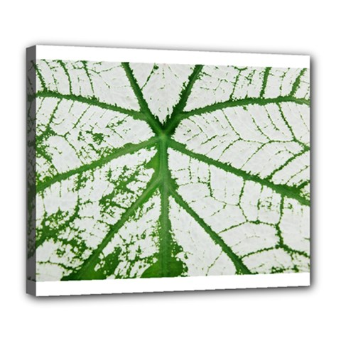Leaf Patterns Deluxe Canvas 24  X 20  (framed)
