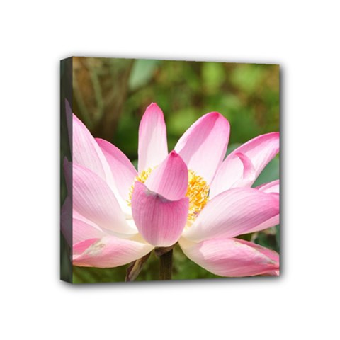 A Pink Lotus Mini Canvas 4  X 4  (framed) by natureinmalaysia