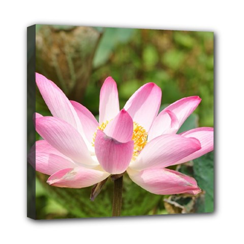 A Pink Lotus Mini Canvas 8  X 8  (framed) by natureinmalaysia