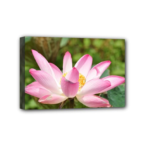 A Pink Lotus Mini Canvas 6  X 4  (framed) by natureinmalaysia