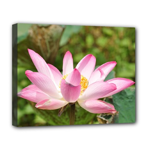 A Pink Lotus Deluxe Canvas 20  X 16  (framed) by natureinmalaysia