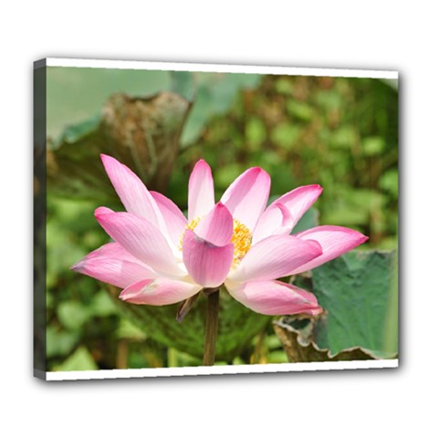 A Pink Lotus Deluxe Canvas 24  X 20  (framed) by natureinmalaysia