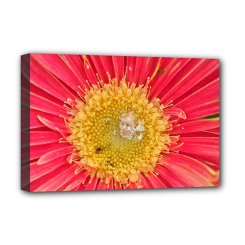 A Red Flower Deluxe Canvas 18  X 12  (framed) by natureinmalaysia