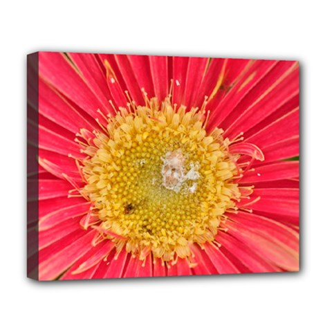 A Red Flower Deluxe Canvas 20  X 16  (framed) by natureinmalaysia