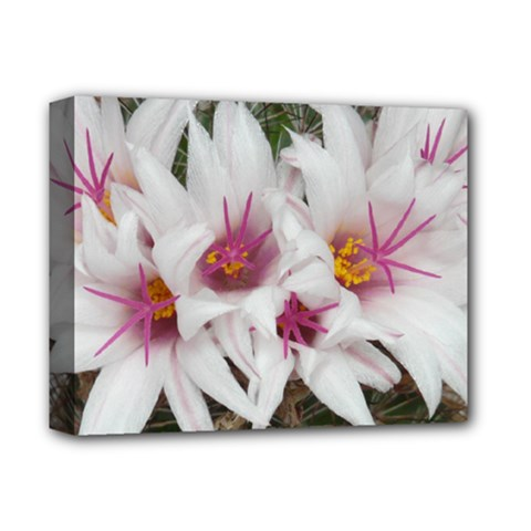 Bloom Cactus  Deluxe Canvas 14  X 11  (framed) by ADIStyle