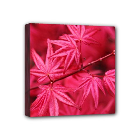 Red Autumn Mini Canvas 4  X 4  (framed) by ADIStyle
