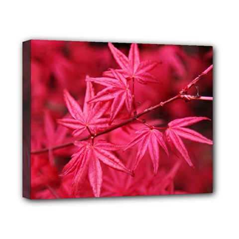 Red Autumn Canvas 10  X 8  (framed) by ADIStyle