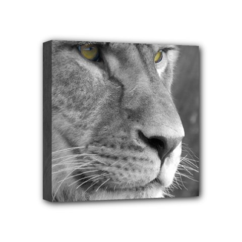 Lion 1 Mini Canvas 4  X 4  (framed) by smokeart