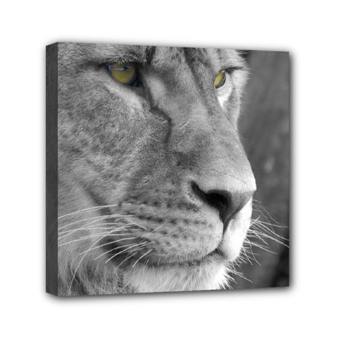 Lion 1 Mini Canvas 6  X 6  (framed) by smokeart