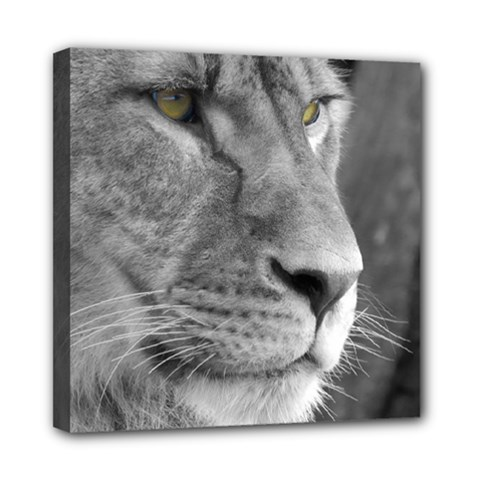 Lion 1 Mini Canvas 8  X 8  (framed) by smokeart
