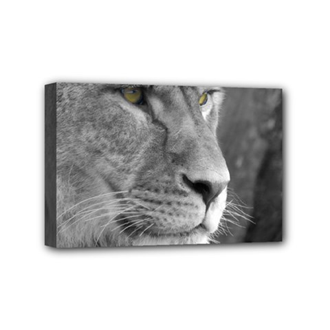 Lion 1 Mini Canvas 6  X 4  (framed) by smokeart