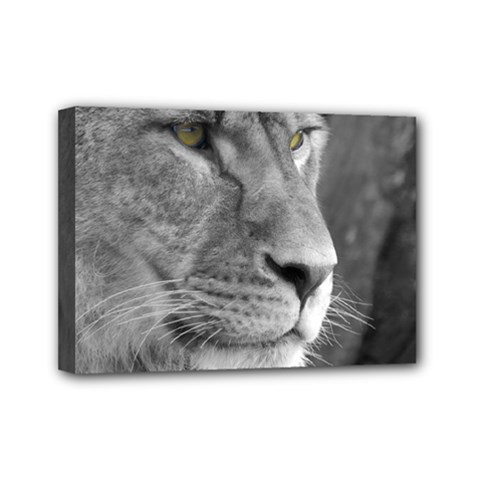 Lion 1 Mini Canvas 7  X 5  (framed) by smokeart