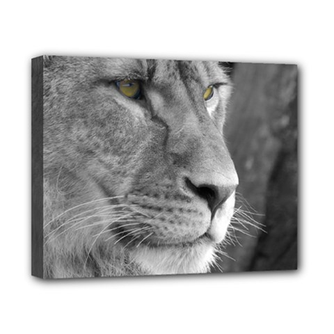 Lion 1 Canvas 10  X 8  (framed)