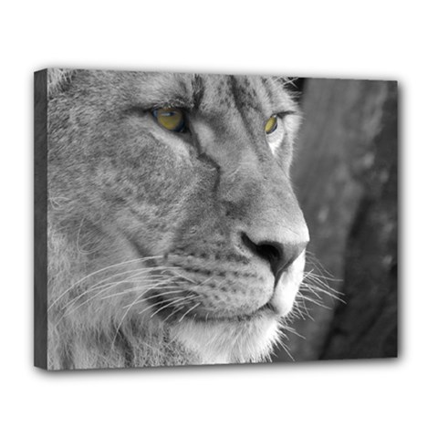 Lion 1 Canvas 14  X 11  (framed) by smokeart