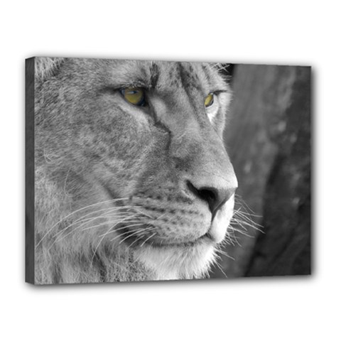 Lion 1 Canvas 16  X 12  (framed) by smokeart