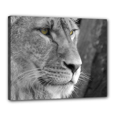 Lion 1 Canvas 20  X 16  (framed) by smokeart