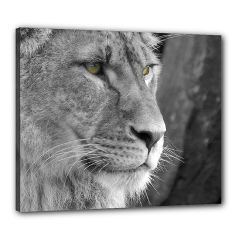 Lion 1 Canvas 24  X 20  (framed) by smokeart