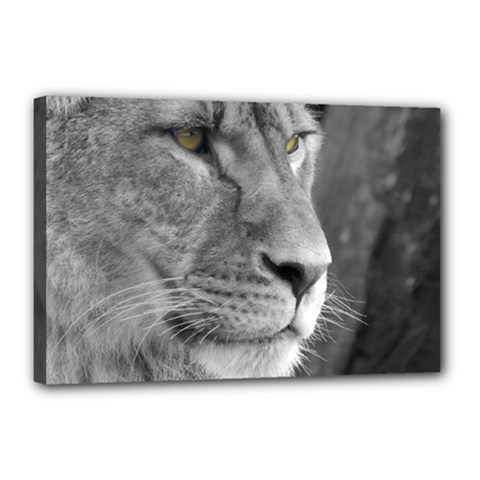 Lion 1 Canvas 18  X 12  (framed) by smokeart