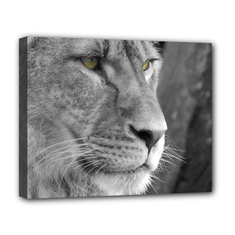 Lion 1 Deluxe Canvas 20  X 16  (framed) by smokeart