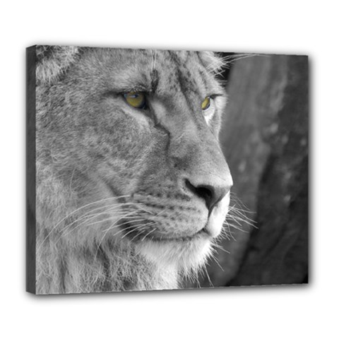 Lion 1 Deluxe Canvas 24  X 20  (framed) by smokeart