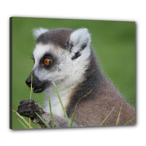 Ring Tailed Lemur  2 Canvas 24  X 20  (framed)