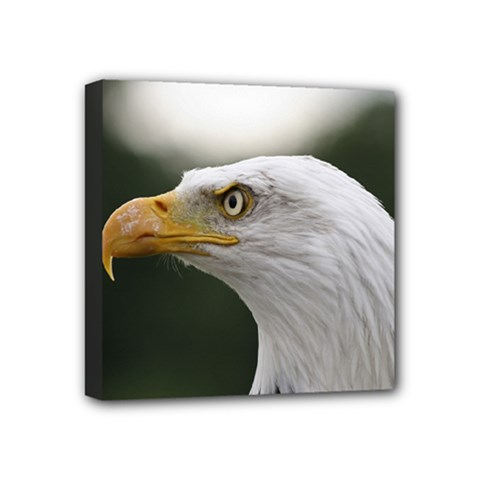 Bald Eagle (1) Mini Canvas 4  X 4  (framed) by smokeart