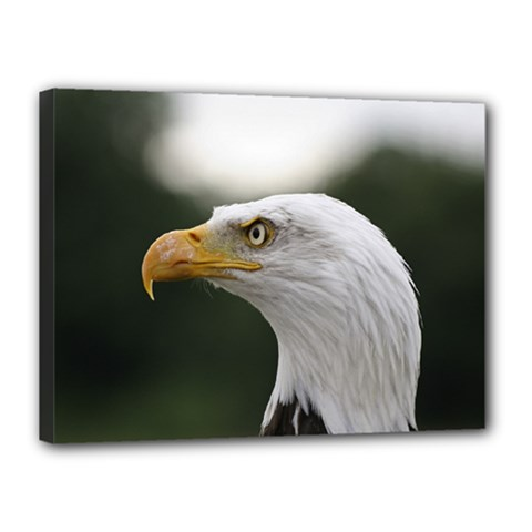 Bald Eagle (1) Canvas 16  X 12  (framed) by smokeart