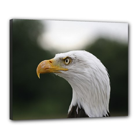 Bald Eagle (1) Canvas 20  X 16  (framed) by smokeart