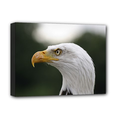 Bald Eagle (1) Deluxe Canvas 16  X 12  (framed)  by smokeart