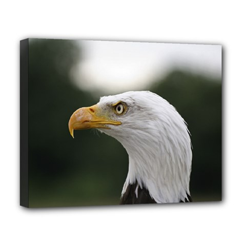 Bald Eagle (1) Deluxe Canvas 20  X 16  (framed) by smokeart