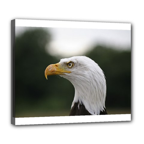 Bald Eagle (1) Deluxe Canvas 24  X 20  (framed) by smokeart