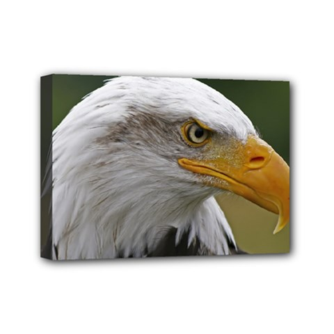 Bald Eagle (2) Mini Canvas 7  X 5  (framed) by smokeart