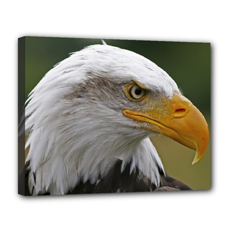 Bald Eagle (2) Canvas 14  X 11  (framed) by smokeart