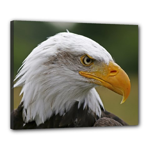 Bald Eagle (2) Canvas 20  X 16  (framed) by smokeart