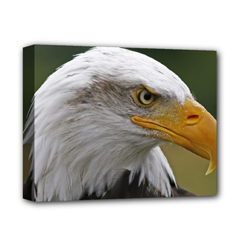 Bald Eagle (2) Deluxe Canvas 14  X 11  (framed) by smokeart