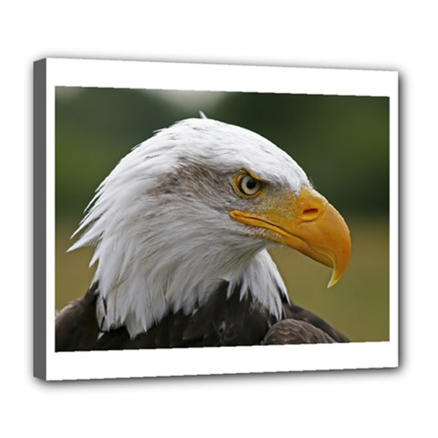 Bald Eagle (2) Deluxe Canvas 24  X 20  (framed) by smokeart
