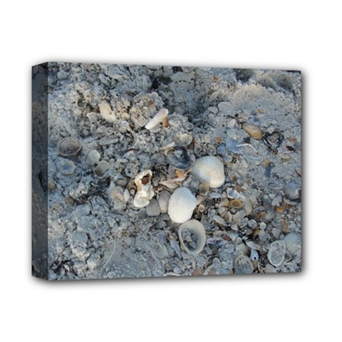 Sea Shells On The Shore Deluxe Canvas 14  X 11  (framed)