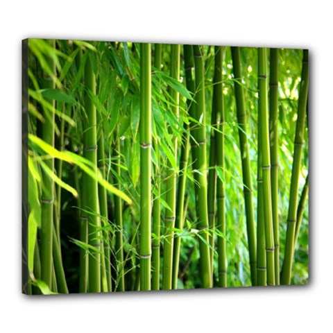 Bamboo Canvas 24  X 20  (framed)
