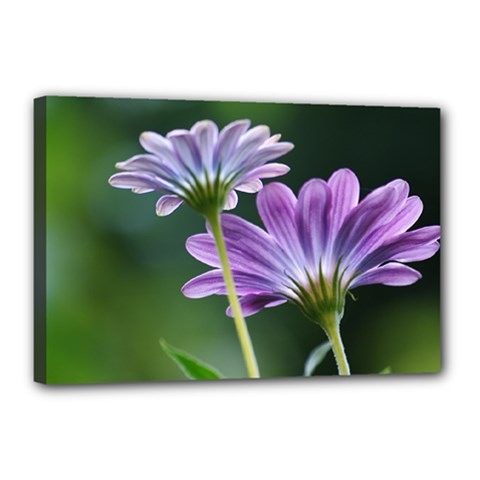 Flower Canvas 18  X 12  (framed) by Siebenhuehner