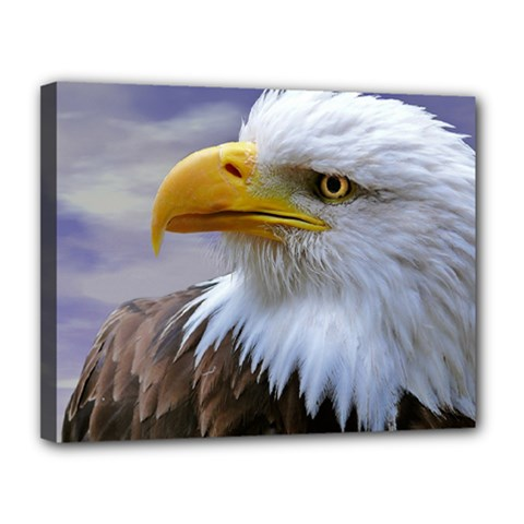 Bald Eagle Canvas 14  X 11  (framed) by Siebenhuehner